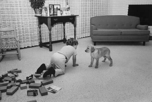 Jouer au chien