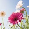 Coucher de soleil sur fleurs