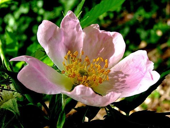 fleurs1.06-049.JPG