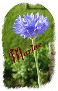 marine-bleue.gif