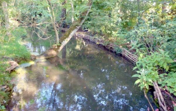 Le-jardin-d-eau-a-Giverny--Maison-de-Monet-.jpg