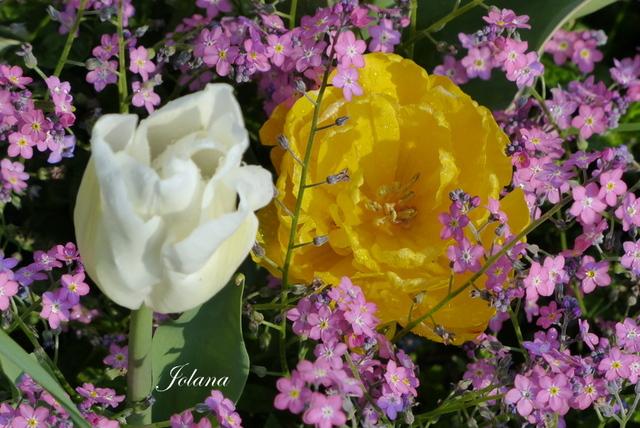 WE fleuri