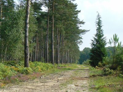 Le circuit forestier