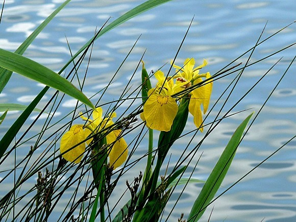fleurs1.06-052.JPG