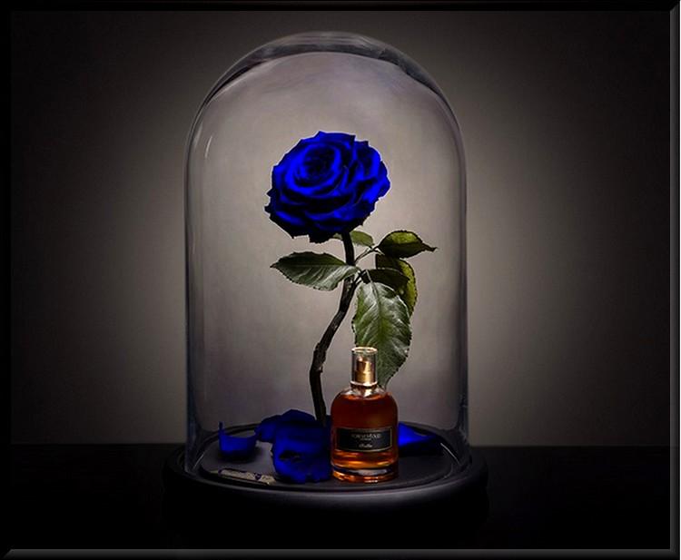 La rose éternelle