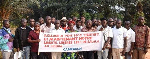 Cameroun: des paysans occupent une plantation de Bolloré pour dénoncer l'accaparement de leurs terres