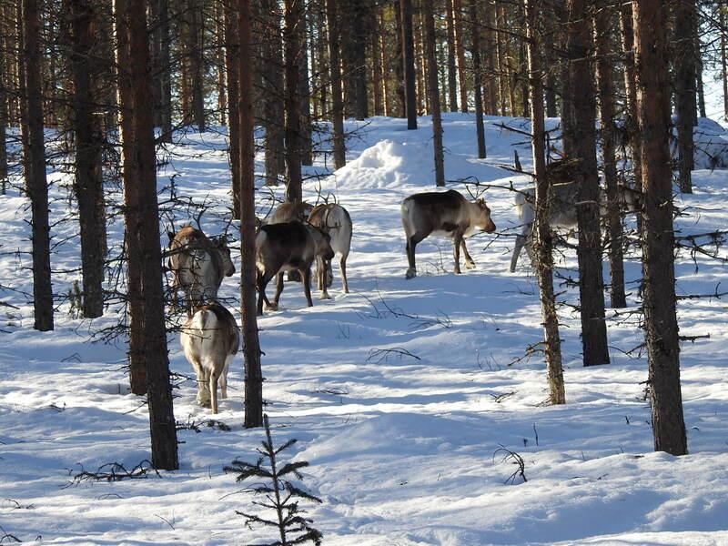 Passage de Rennes en Laponie