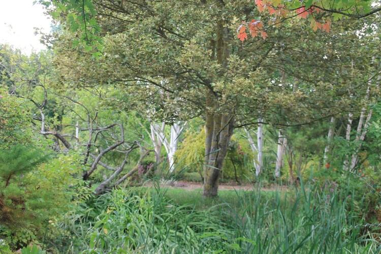 Le  jardin du Moulin Ventin