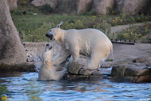 phots ours en jeux mutuels