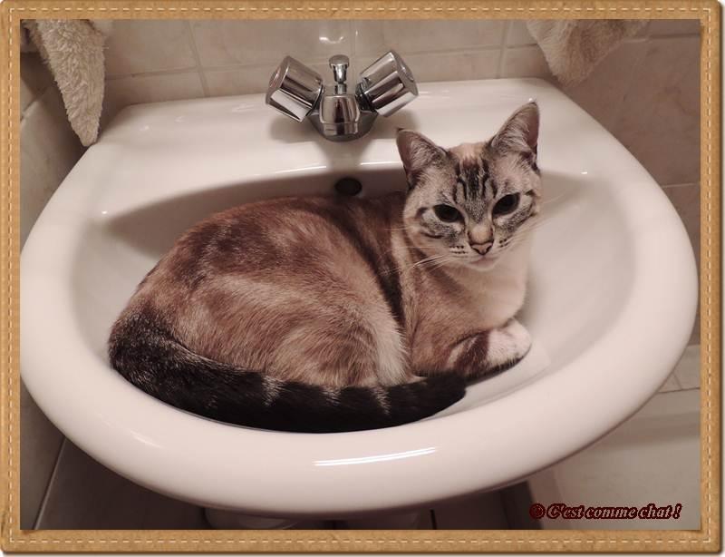 Il beau, le lavabo !