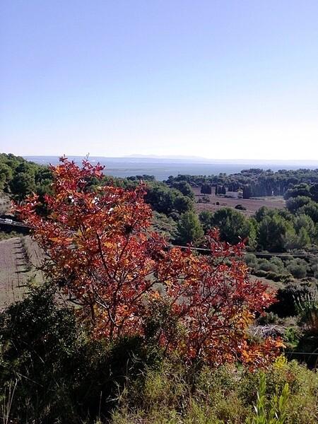 Istres colline (3)