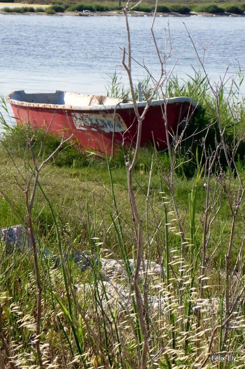 Encore des barques de pêcheur