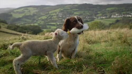 Vendredi haïku, senryû, l'agneau pascal...