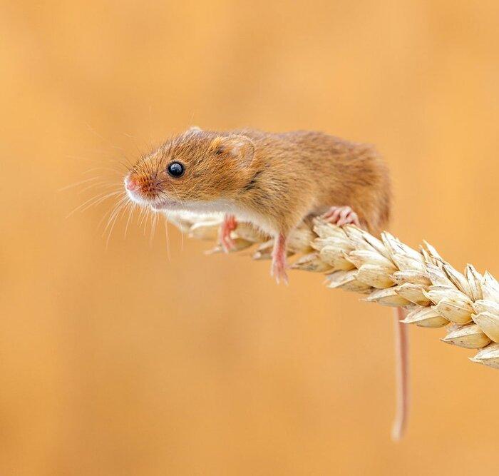 Ces photographies attendrissantes vont vous faire adorer les petites souris