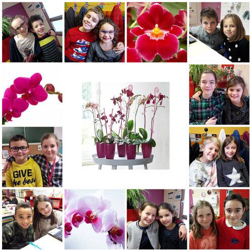 Comment bien s'occuper des orchidées!