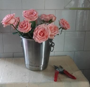 Novembre en roses