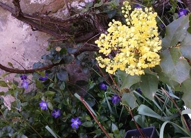 Fleurs de printemps/Spring flowers