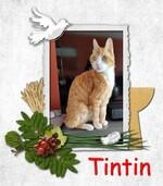 Tintin le chat patrouilleur : mission terminée