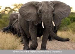 RDC: 4 FONCTIONNAIRES TUES EN LUTTANT CONTRE LE BRACONNAGE D'ELEPHANTS