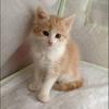 Cat Oriane