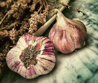 Purin, décoction ou infusion d'ail et oignon