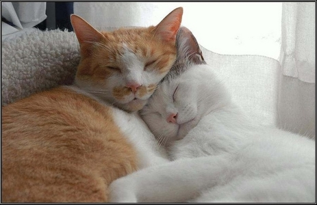 Chats ... Images - 8