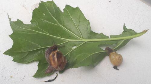 expériences avec les aliments : test 3 des feuilles: