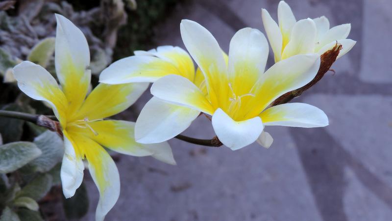 Balade de printemps au jardin...