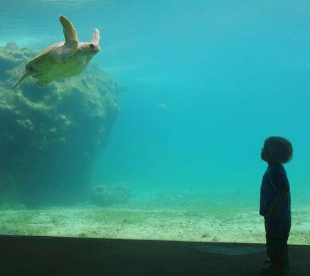 Raphael et tortue