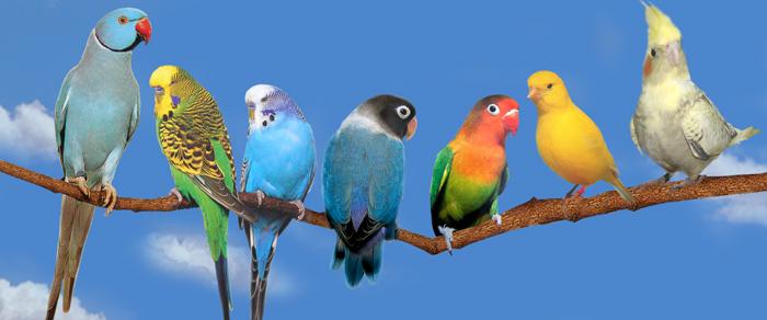 """Résultat de recherche d'images pour """"oiseaux"""""""