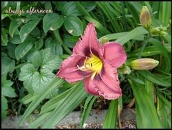 et encore des fleurs