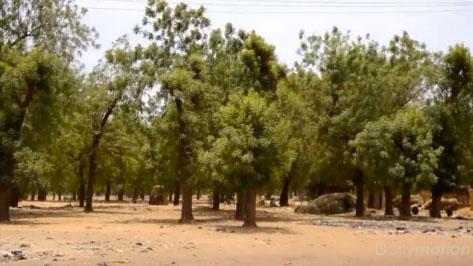 Fête nationale de l'arbre et inauguration du jardin botanique
