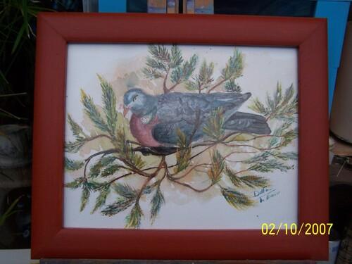 un pigeon ramier