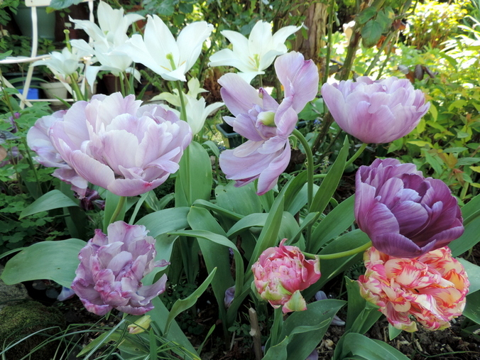 Fleurs d'Avril en mélange...