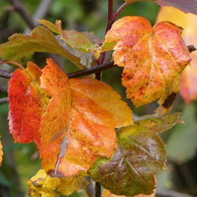 L'automne est à l'oeuvre