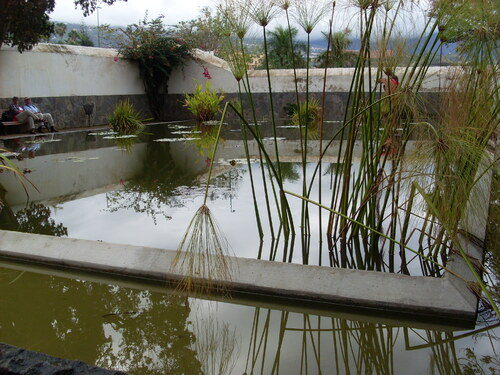 Le Jardin d'acclimatation de la OROTAVA Canaries ( 5 )