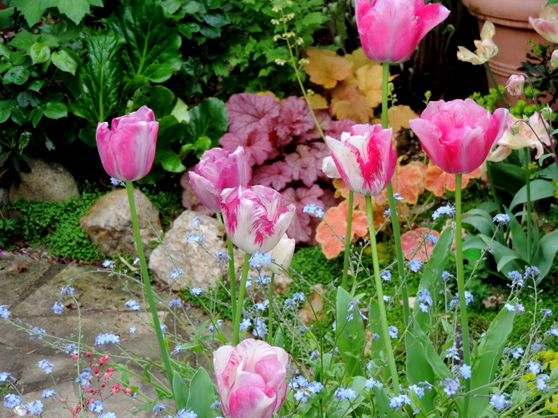 Balade au jardin...