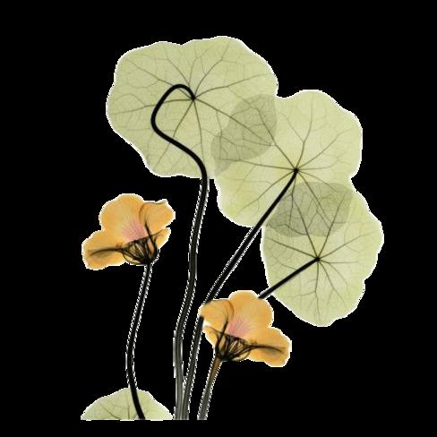 Tubes : Aquarelles fleurs