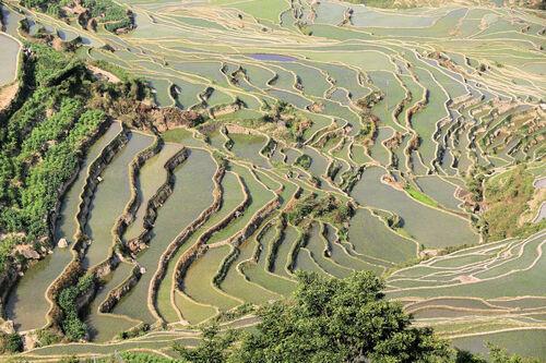 Les rizières en terrasses