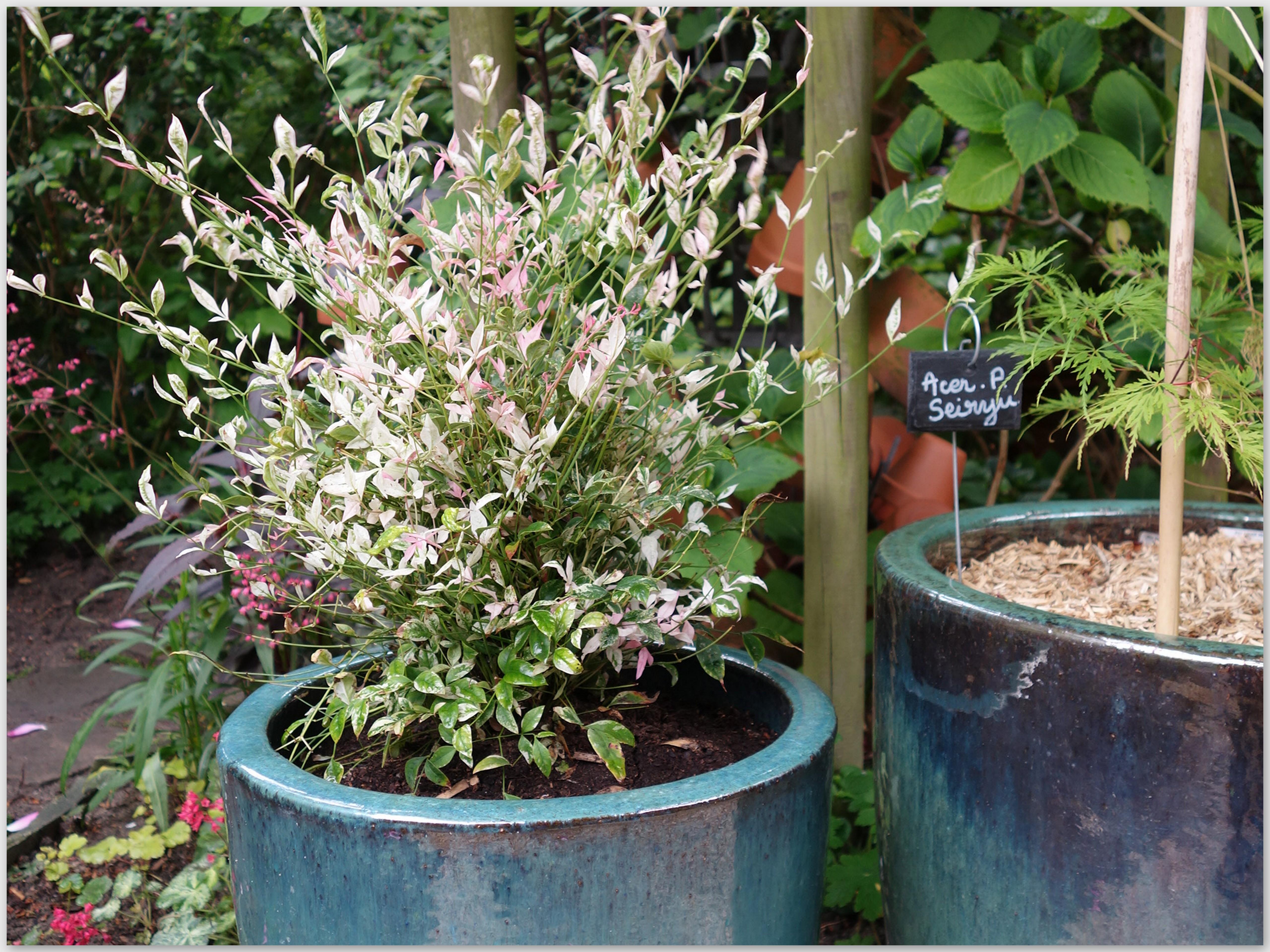 Arbuste Persistant En Pot Plein Soleil plantations - (page 2) - le jardin du 130
