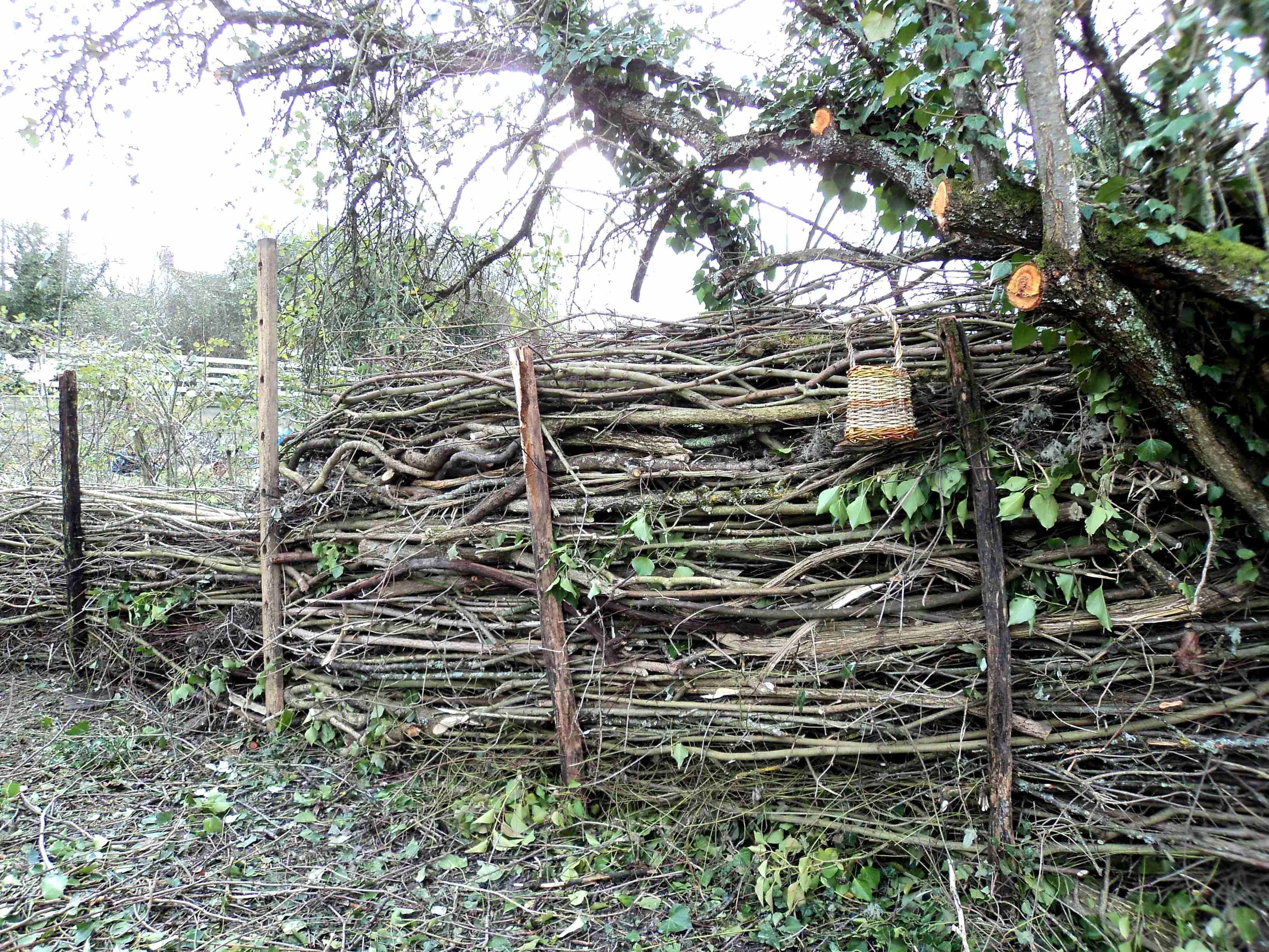Faire Une Palissade Avec Des Branches le jardin des petites ruches - stages apiculture écologique