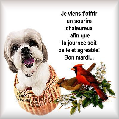 Bon Mardi - améthyste
