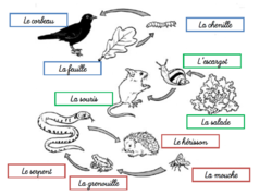 leçon relations alimentaires et chaines alimentaires (animaux)