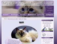 Un chat-cré blog