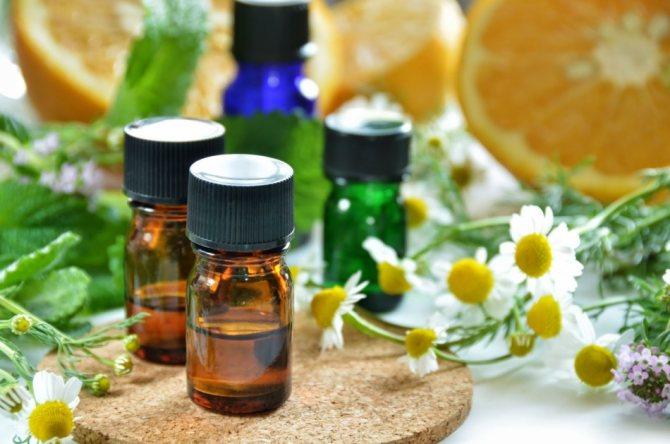 Лечение геморроя пихтовым маслом