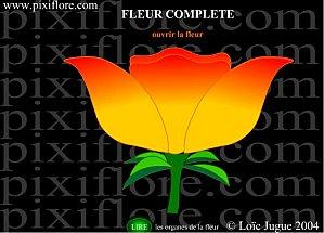 """Résultat de recherche d'images pour """"pixiflore fleur complete"""""""
