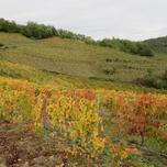 7 novembre 2019 - Les vignes en automne
