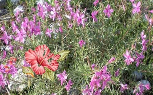 La fleur qui parle