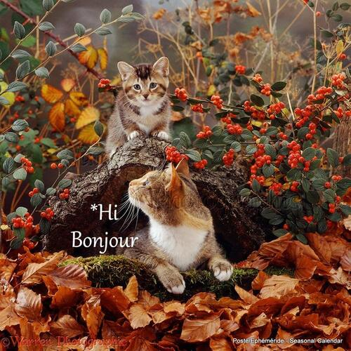 poèmes d'automne - *♥*..*♥*.. bienvenue my page printemps ma