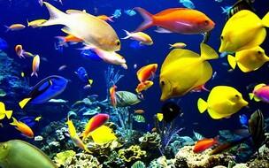 """Résultat de recherche d'images pour """"image multitude poissons"""""""